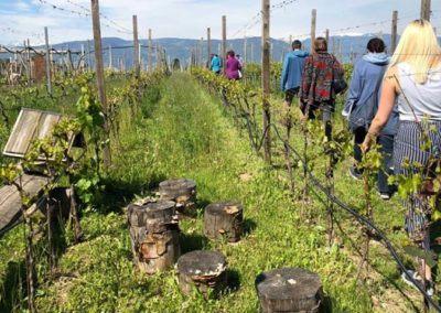 Med-vinogradi