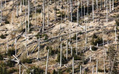 3. javni razpis za aktivnost Dela za odpravo škode in obnovo gozda iz Programa razvoja podeželja 2014-2020