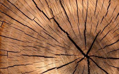 Javni razpis: P4L 2020 – Spodbude za MSP za razvoj in uvajanje novih produktov v lesarstvu 4.0