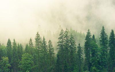 Začetek postopka obnove območnih gozdnogospodarskih in lovsko upravljavskih načrtov